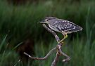 Heron Hunt by Macky