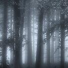 Autumn Mists by Ann Garrett