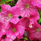 Cluster of Pink by Susan Blevins
