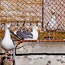 jailbird by Lenny La Rue, IPA