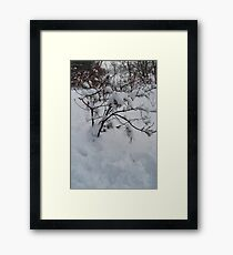 Charlie Brown Tree Framed Print