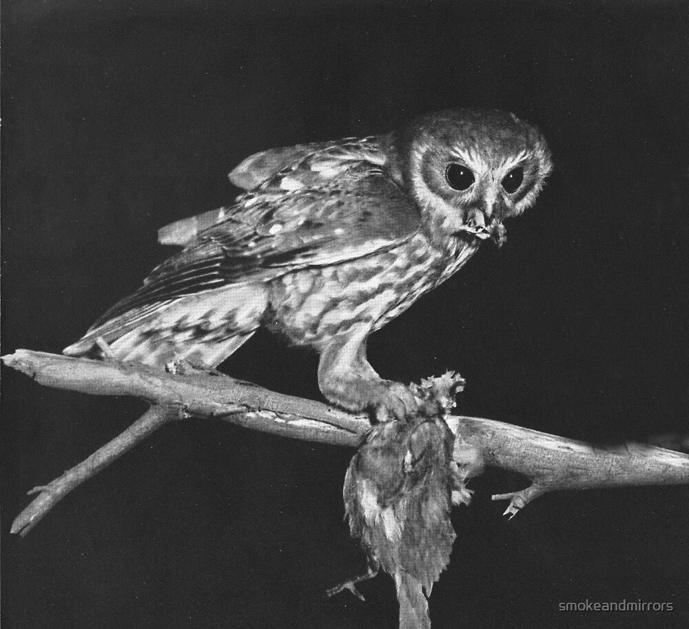 Hunting Owl by smokeandmirrors
