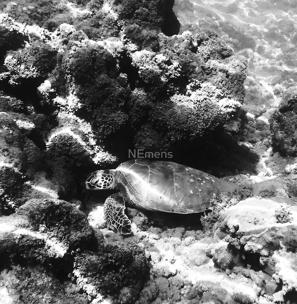 Sea Turtle in Black and White by NEmens