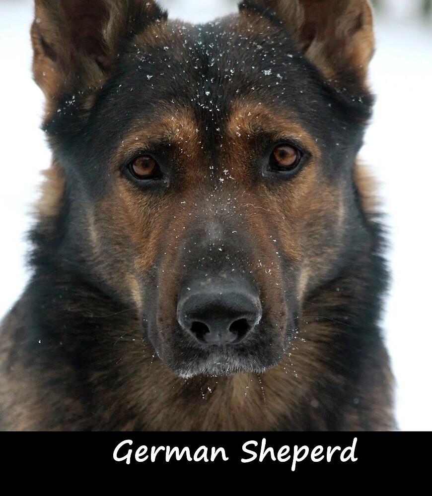 German Sheperd by Fjfichman