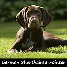 German Shorthaired Pointer by Fjfichman