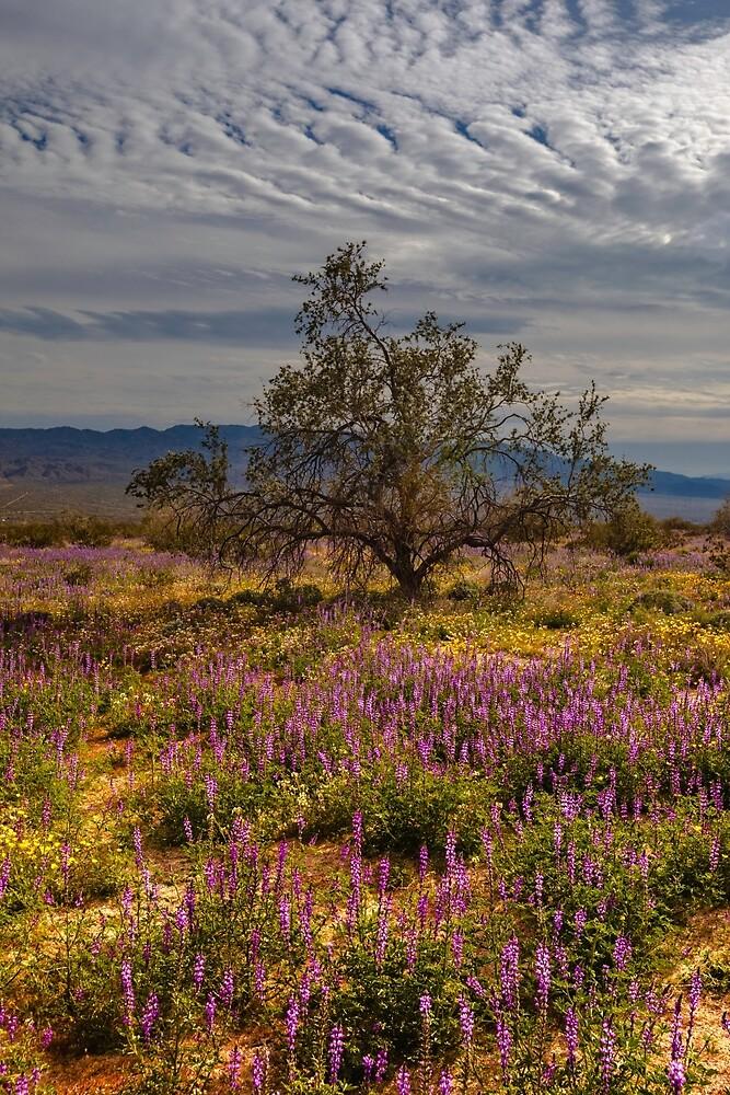 Joshua Tree National Park, New Life by photosbyflood