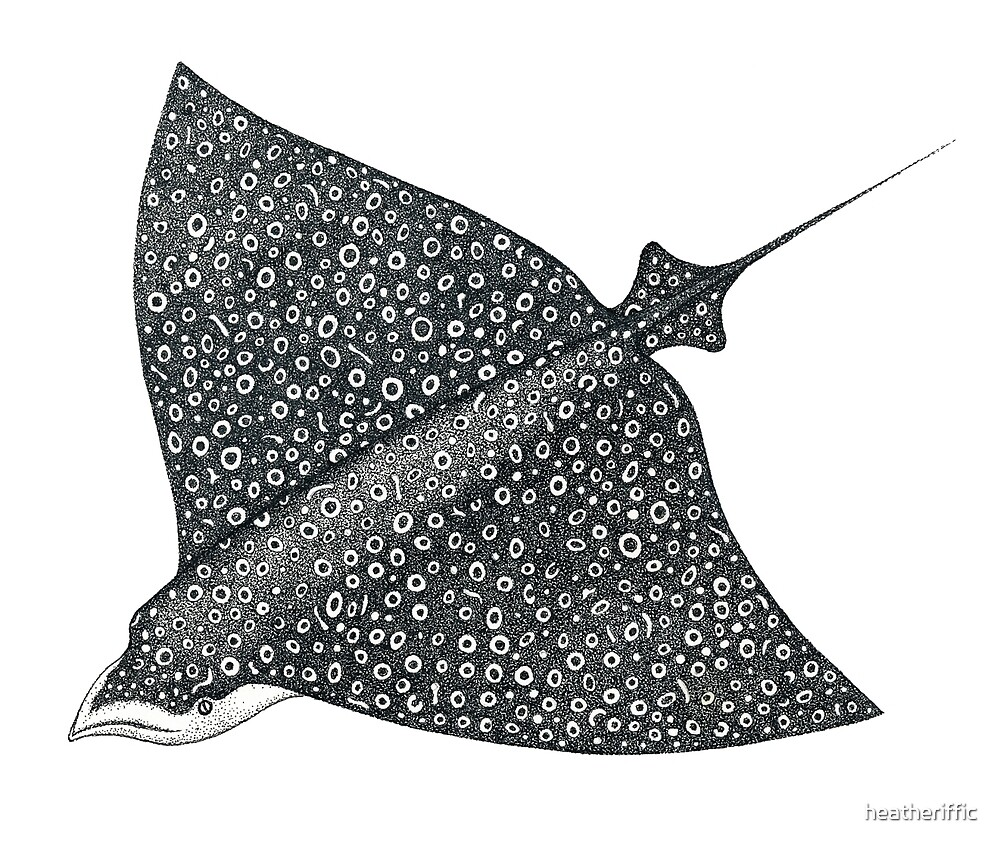 Eagle Ray by heatheriffic