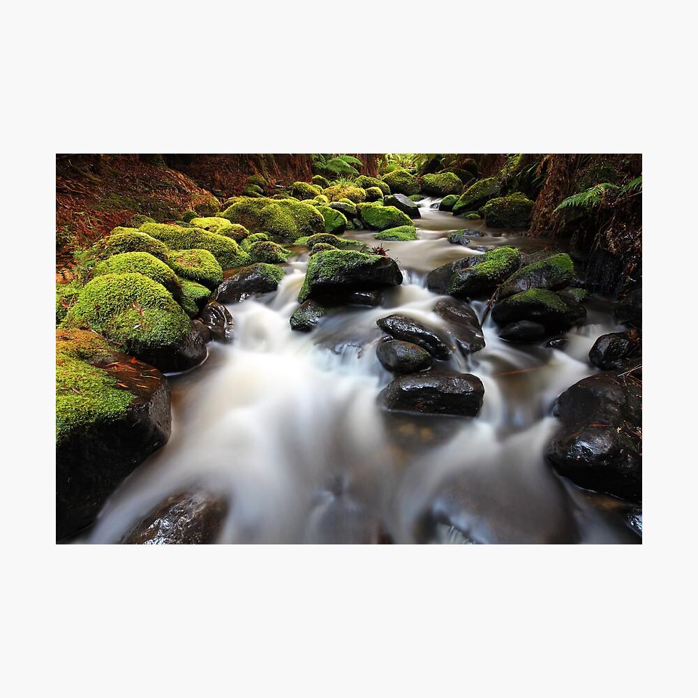 Verdant Stream Sleeps, Otways, Great Ocean Road, Australia Photographic Print
