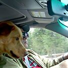 Our new dog Colby on the ride home from animal control. by Edward Henzi