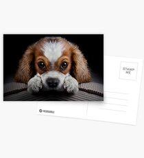 Shamelessly Persuasive Postcards