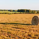 Golden Field by christinaree