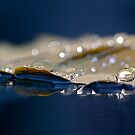 Sparkling morning by Maria Ismanah Schulze-Vorberg