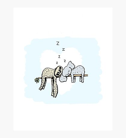 Koala and Sloth Sleeping Photographic Print