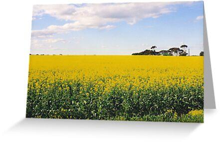 Fields of Gold by Michael John