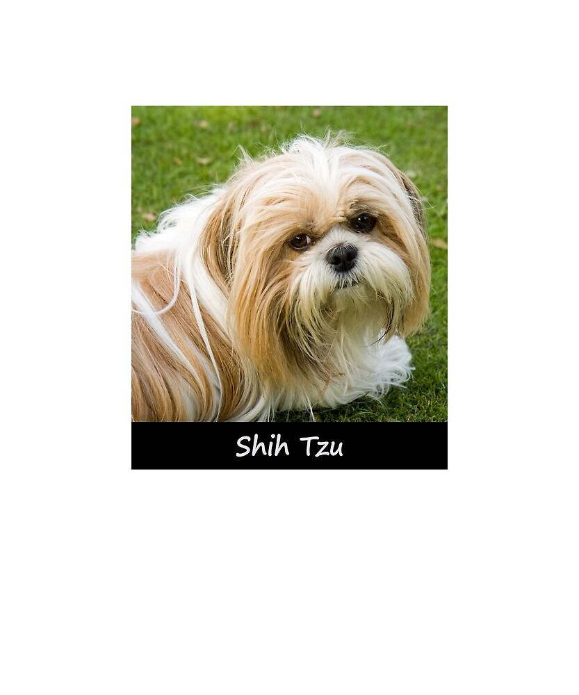 Shih Tzu by Fjfichman