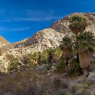 49 Palms Oasis Panorama by Zane Paxton
