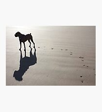 Boxer at the Beach Photographic Print