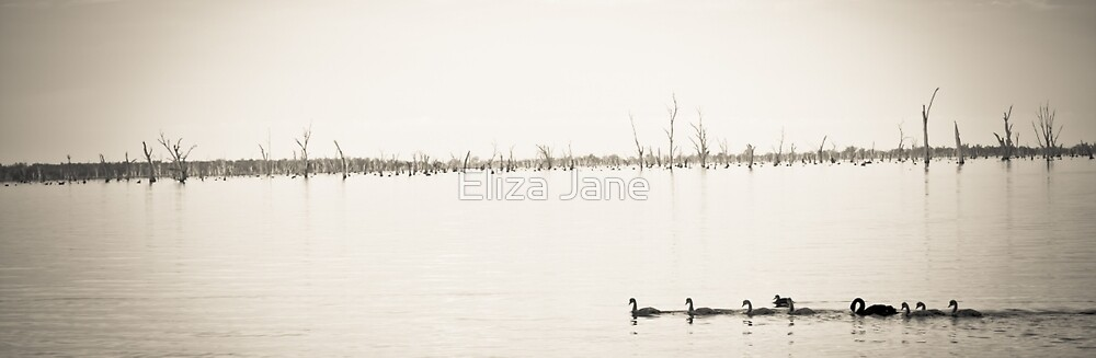 Ducks on a lake by Eliza Jane