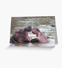 Shenanigans at the hippo pool Greeting Card