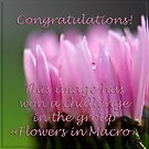 """Flowers in Macro"" Banner by Jacinthe Brault"