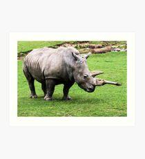 Rhinocerous Art Print