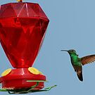 Hummingbird.. Lunch Time1 by MaluC