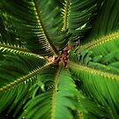 Palm Depths by Ellen Cotton