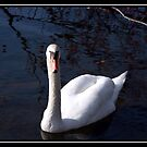 ONE SWAN by BOLLA67