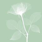 «Rosa» de enami