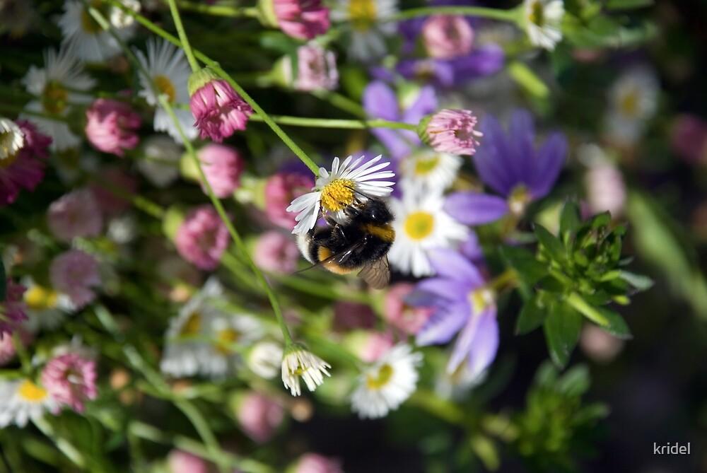 Buzzy Bee by kridel