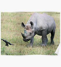 Rhinocerous 10 Poster