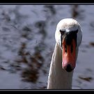 AIN`T I PICTURESQUE by BOLLA67