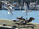 fast food at the docks by tego53