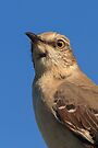 Mockingbird Portrait by WorldDesign