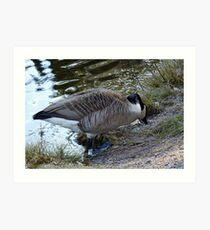 Water World - Mother Goose Grazing Art Print