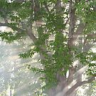 Smoke and Sunlight in the Tree by DebbieCHayes