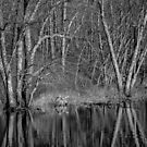 Trees Along the River by April Koehler