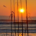 Florida Sunrise by MitchM