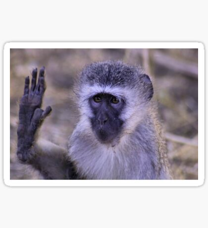 HEY STOP !!! - Vervet Monkey, (CERCOPITHECUS PYGERYTHRUS) Sticker