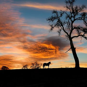 Stunning Horse and Oak Tree in Southwestern Sunset by LazyL
