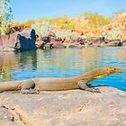 Mertens Water Monitor by Toddy4x4