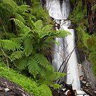 Verdant Falls  by Travis Easton