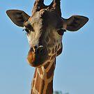 Giraffe by Fjfichman