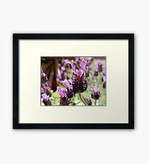 Fathead Lavender Framed Print