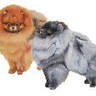Pomeranians by doggyshop