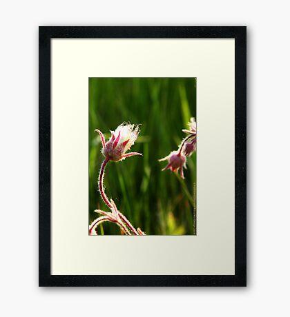 Wildflowers 2 Framed Print