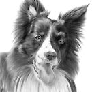 Border collie 2 by doggyshop