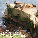 Seals Sleeping...Except for One Sunning!! by Heather Friedman
