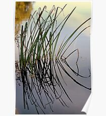 Reed Reflection Poster
