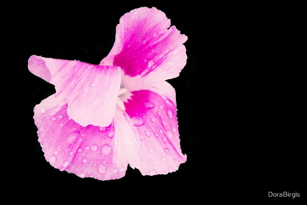 Pink by DoraBirgis